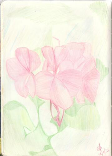 botanic flower